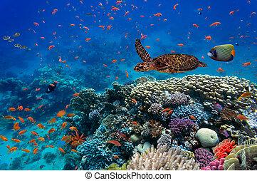 tropical, tortuga, pez