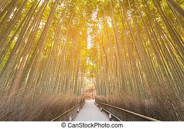 tropical, trayectoria, ambulante, bosque, bambú