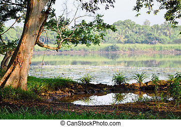 Tropical tree and lake
