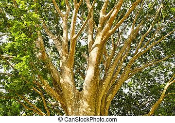 Tropical tree, Costa Rica
