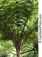 Tropical Tree Detail