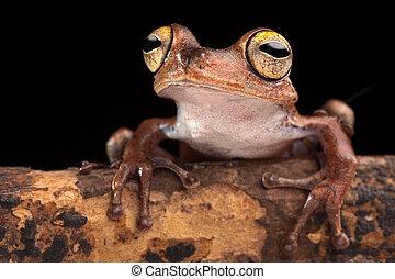 tropical tree frog at night