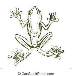 tropical tree frog - vector, sketch, hand drawn illustration...