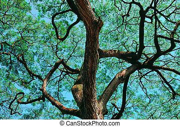 Tropical Tree in Hawaii - A Beautiful Tropical Tree In ...