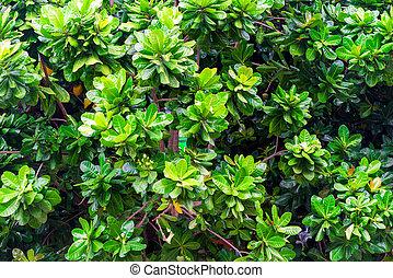 tropical tree leaves juicy green background