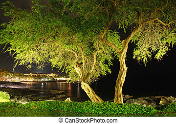 Tropical tree on the beach at night