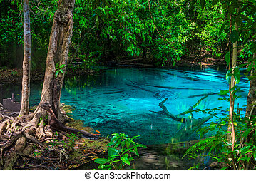 tropical tree on the shore of a blue lake in Thailand, Krabi
