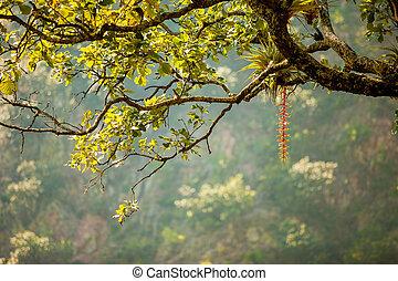 Tropical tree
