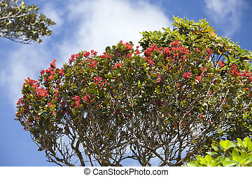 tropical tree with leaves, red on t