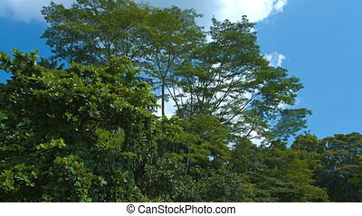 tropical trees against the sky