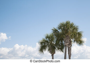 Tropical Trees and Sky Background