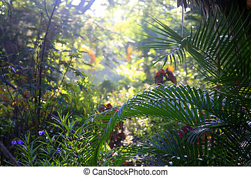 Tropical trees background