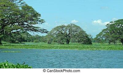 Tropical Trees Growing in Tissa Lake, Sri Lanka - Tropical...