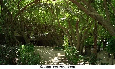 Densely planted, tropical trees provide cool shade for the bungalows at this luxury resort on an island paradise in the Maldives.