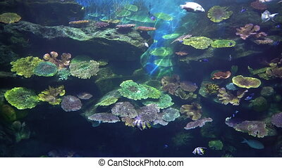 Tropical undersea world of coral reef with angelfish and surgeonfish.