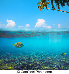 Tropical underwater shot splitted with surface, coconut tree and sky