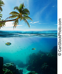 Tropical underwater shot splitted with surface, coconut tree...