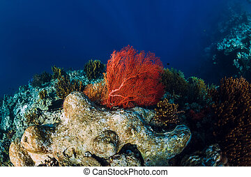 Tropical underwater world with coral reef. Red seaweed at reef. Beautiful place for diving