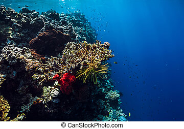 Tropical underwater world with corals. Beautiful place for diving