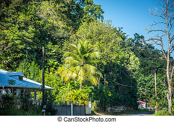 Tropical vegetation by a country road in Guadeloupe