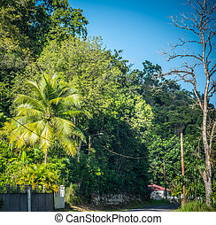 Tropical vegetation by a country road in the Caribbean