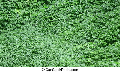 Tropical vegetation moving - Wind blowing on tropical lush...