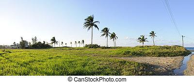 Tropical vegetation panorama