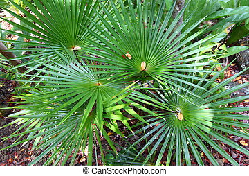 Tropical Vegetation (USVI)