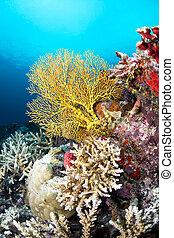 tropical, ventilador, mar amarillo