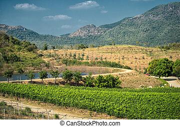 tropical, viñas