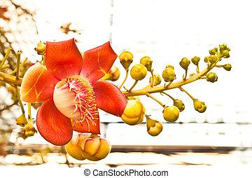 tropical virág