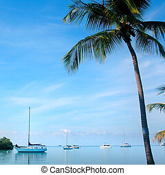 Tropical Vista - Sailboats and palm tree