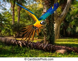 tropical, vuelo, colorido, paisaje, loro