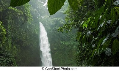 Tropical waterfall hidden in lush jungle green. Green leaves motion by the wind breeze. High humidity