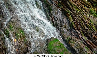 Tropical Waterfall over Mossy Rocks and Tree Roots, with Sound