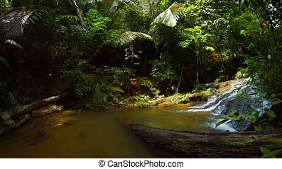 """""""Tropical Waterfall Spills into a Natural Pool in the Rainforest, with Sound"""""""