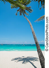 Tropical White Sand Beach with Coconut Palm