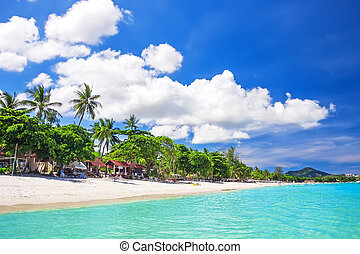 Tropical white sand with palm trees