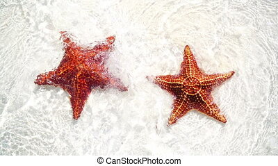 Tropical white sand with red starfishes - Tropical beach...