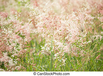 tropical wild meadow under warm sunlight