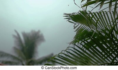 Tropical wind and rain drops falling on the green palm tree...