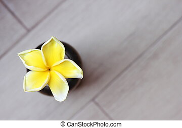 Tropical yellow frangipani flower on grey background. Top view.