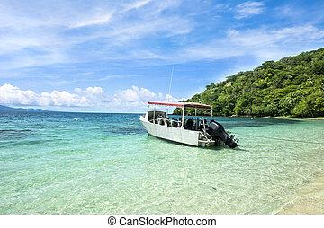 tropical, zambullida, barco, bahía