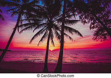 tropicale, bello, spiaggia., tramonto