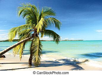 tropicale, brasile, spiaggia