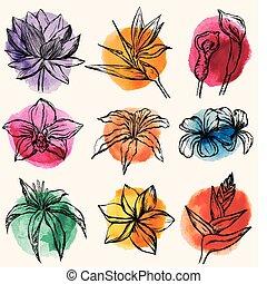 tropicale, c, set, fiori, vettore