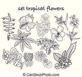tropicale, collezione, mano, fiori, giungla, foglie, disegnato, plants.
