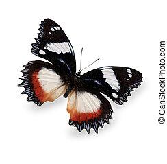 tropicale, farfalla, bianco, isolato