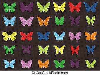tropicale, farfalla, colorito