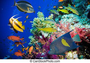 tropicale,  fish, corallo, Scogliera